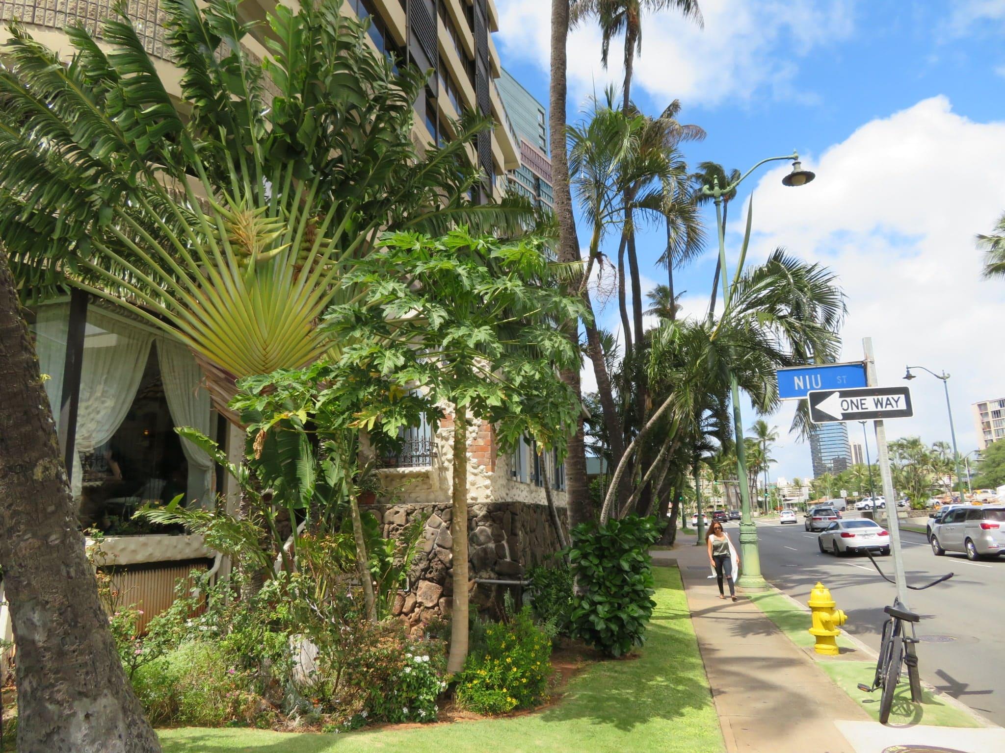 ハワイアンモナーク / Hawaiian Monarch