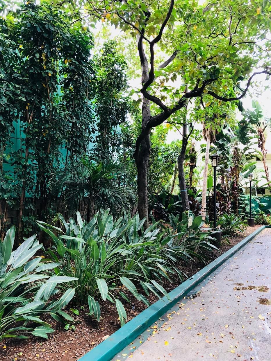 Chateau Waikikiの植物