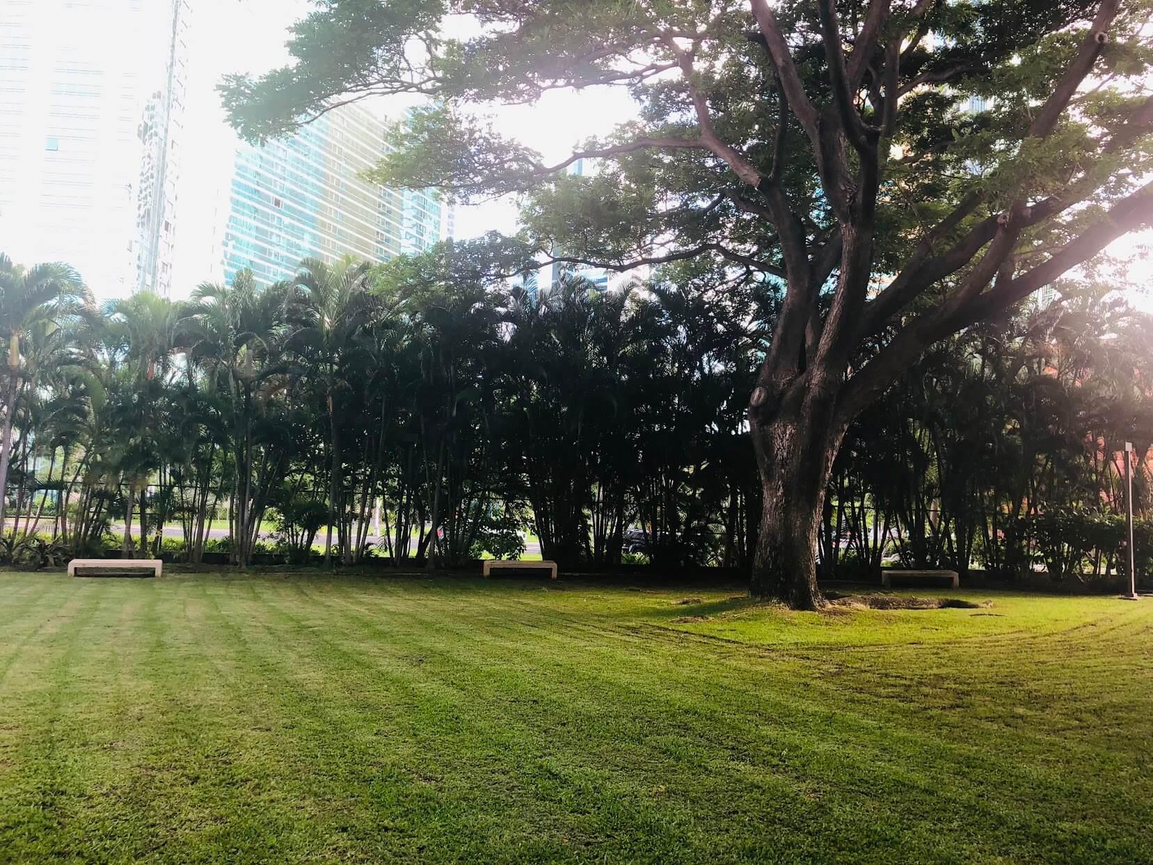 1133 Waimanuの芝生