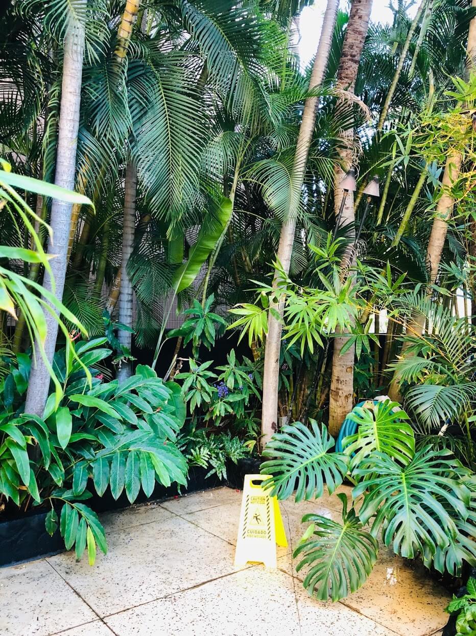 Bamboo Waikikiの植物