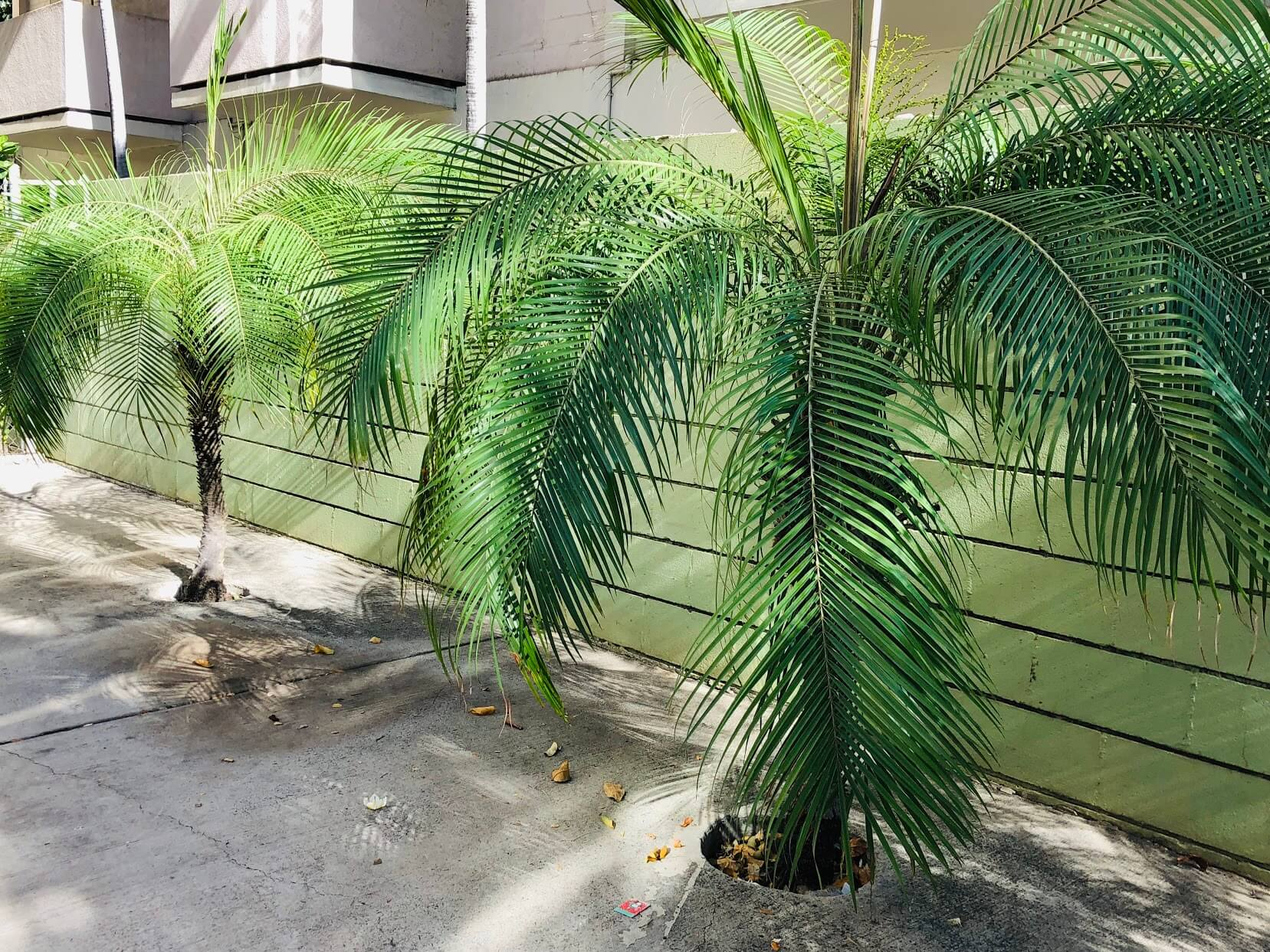 Hale Huiの植物