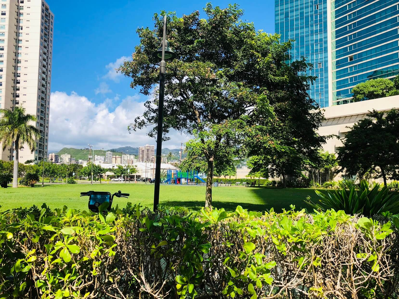 Hokuaの芝生