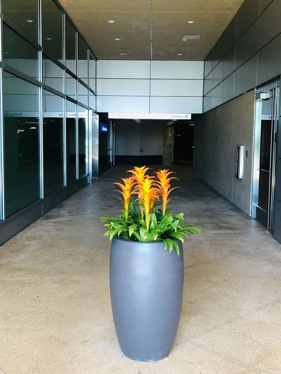 Hokuaの植物