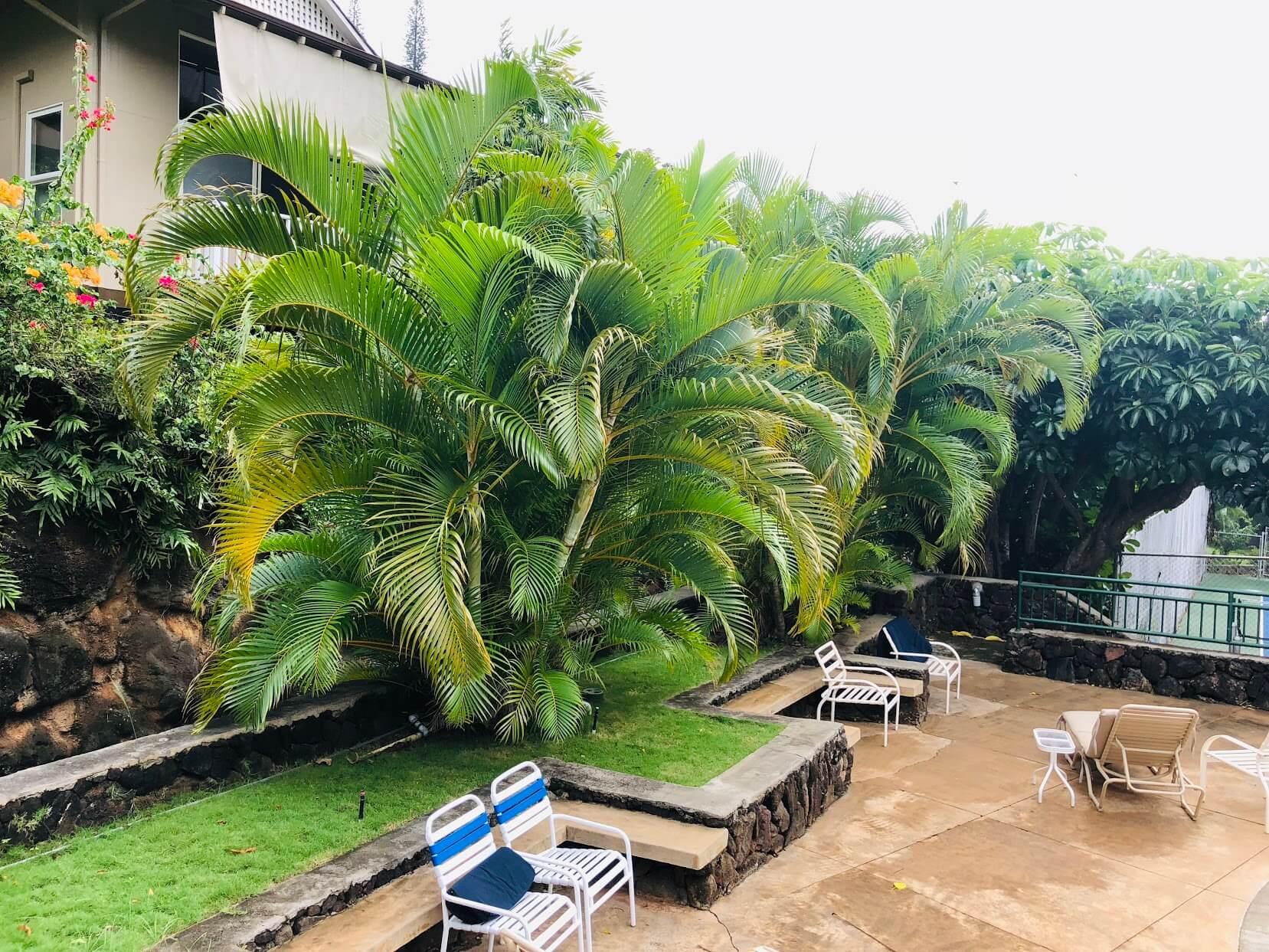Kalani Iki Estatesの植物