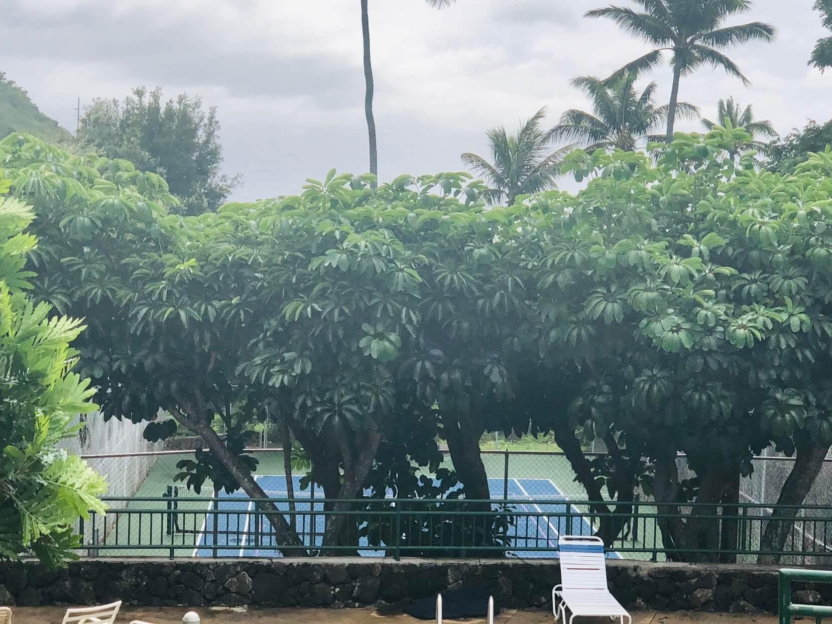 Kalani Iki Estatesのテニスコート