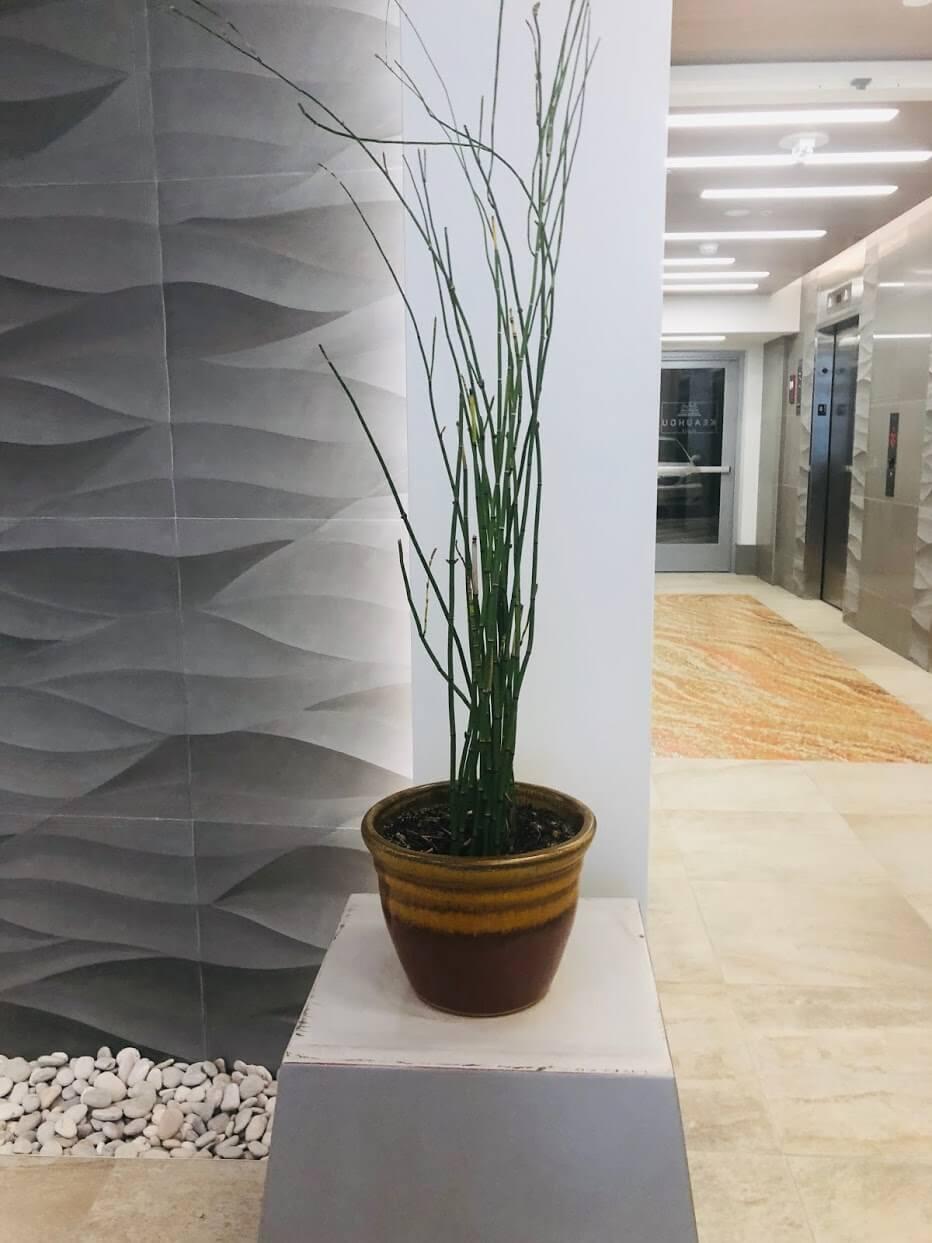 Keahou Placeの植物