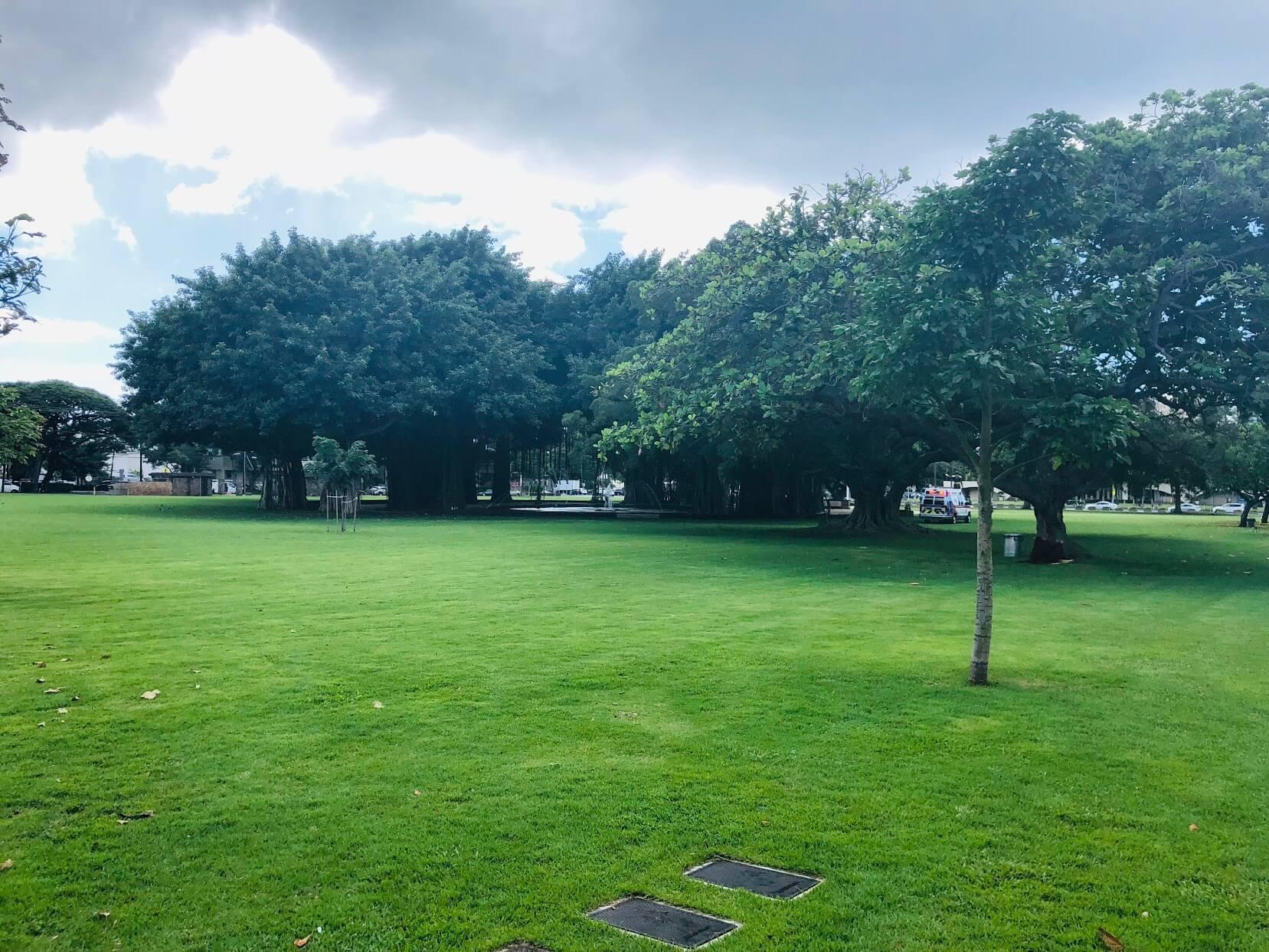 Kinau Villaの芝生