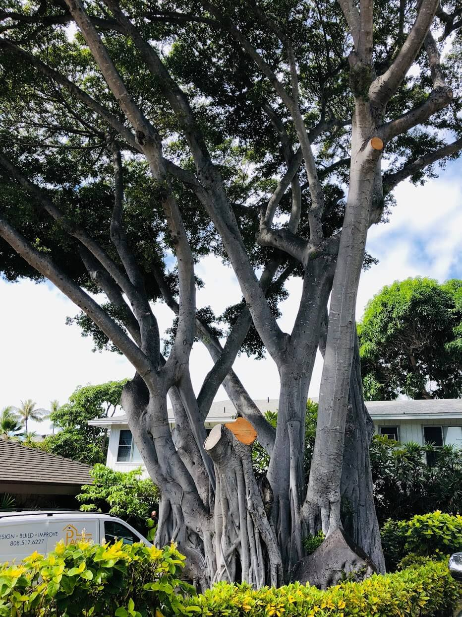 Kuu Makana Diamond Headの木