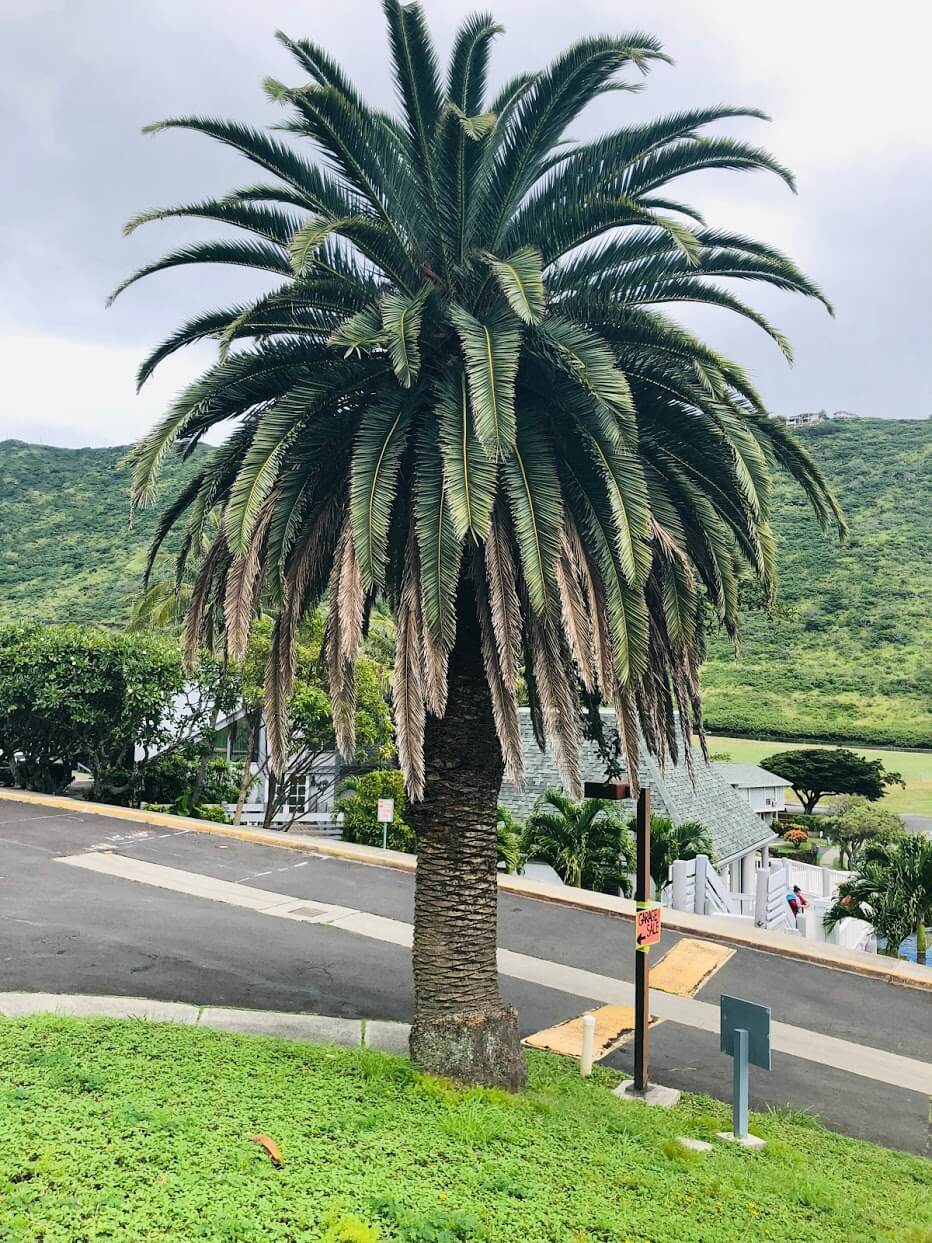 Mariners Villageの木