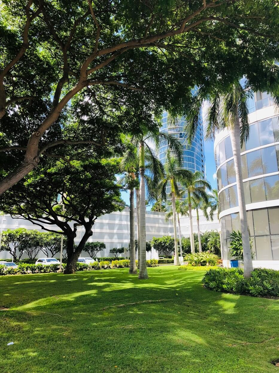 Moana Pacificの芝生