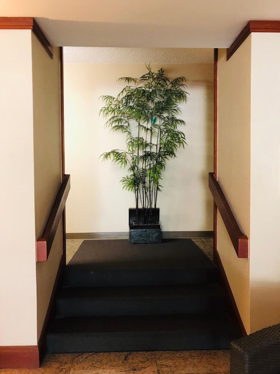 1015 Wilderの観葉植物