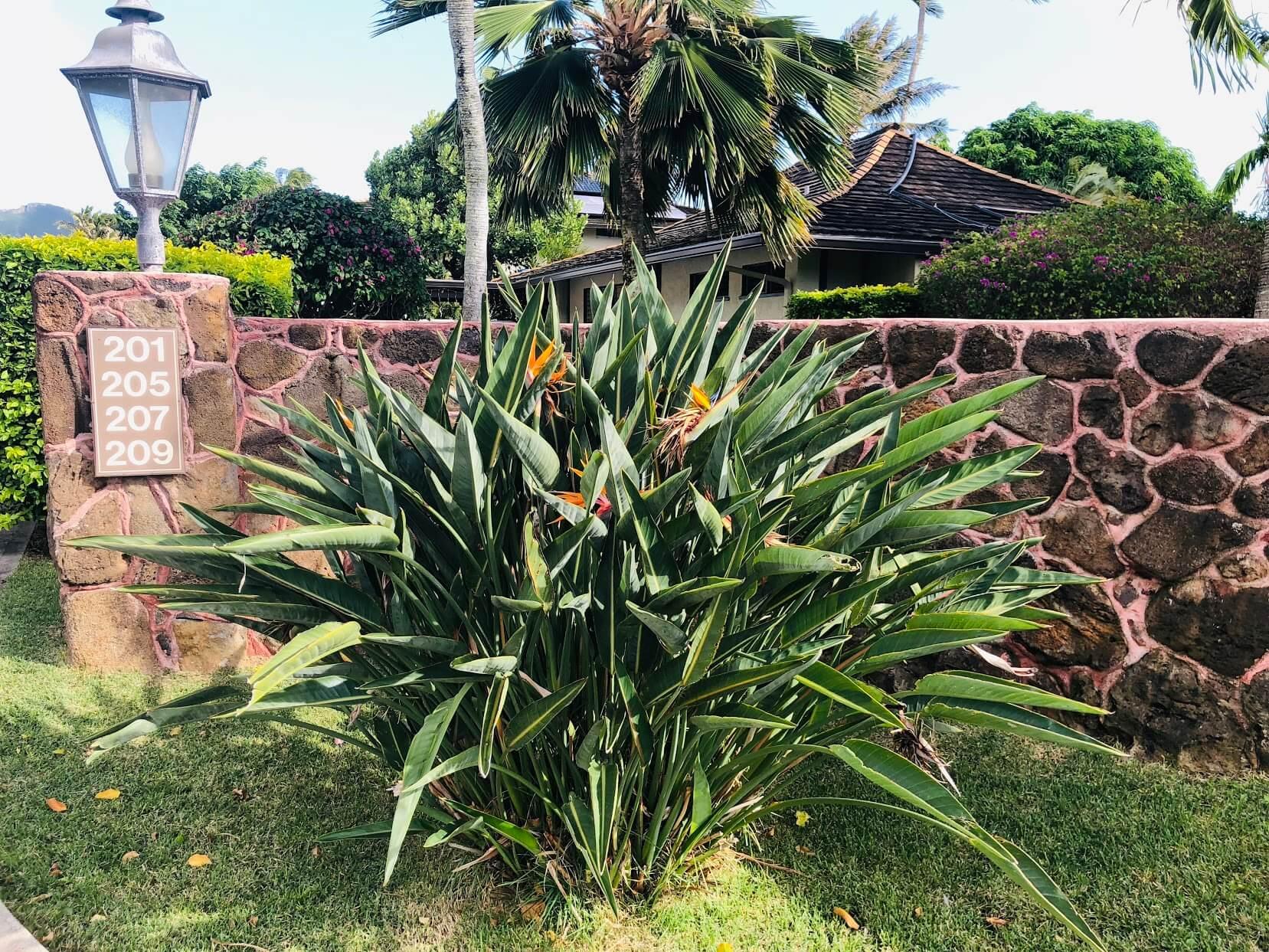 Gateway Peninsulaの植物