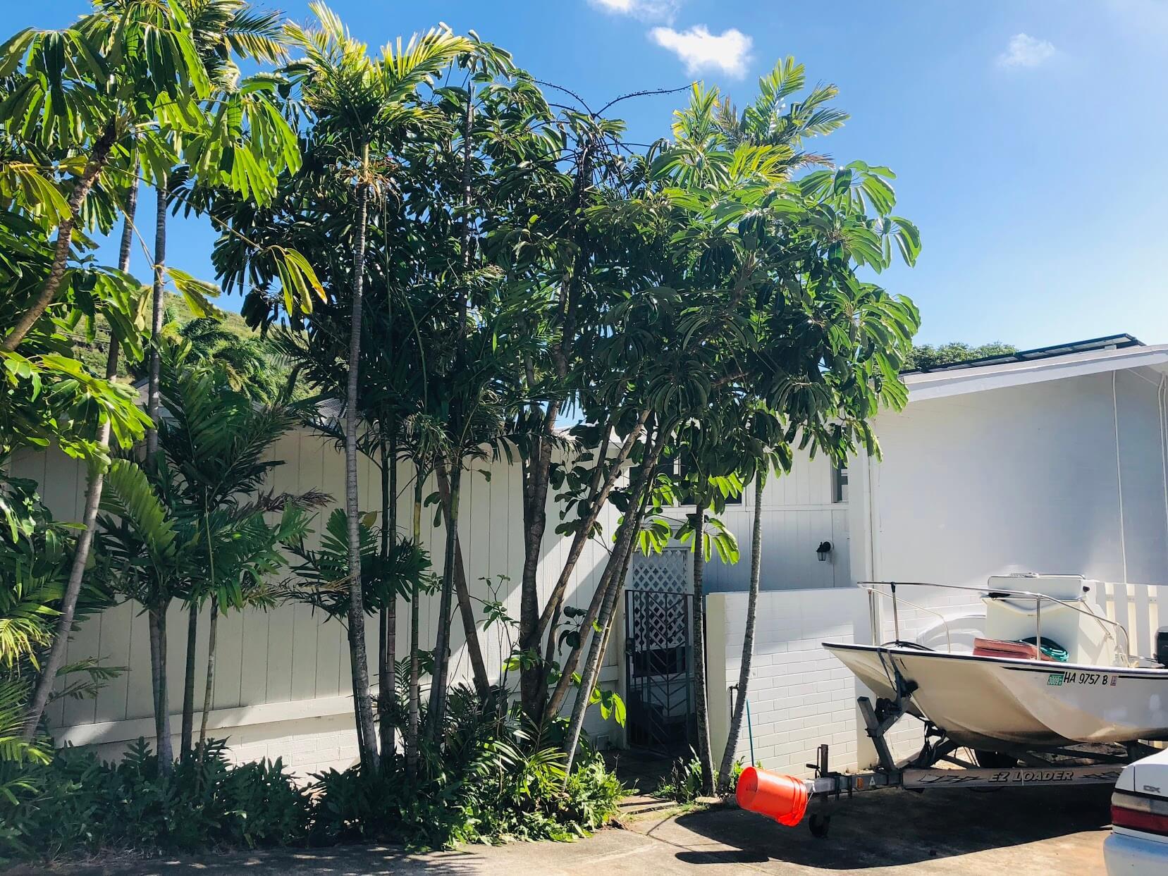 Hale Makani Kaiの樹木