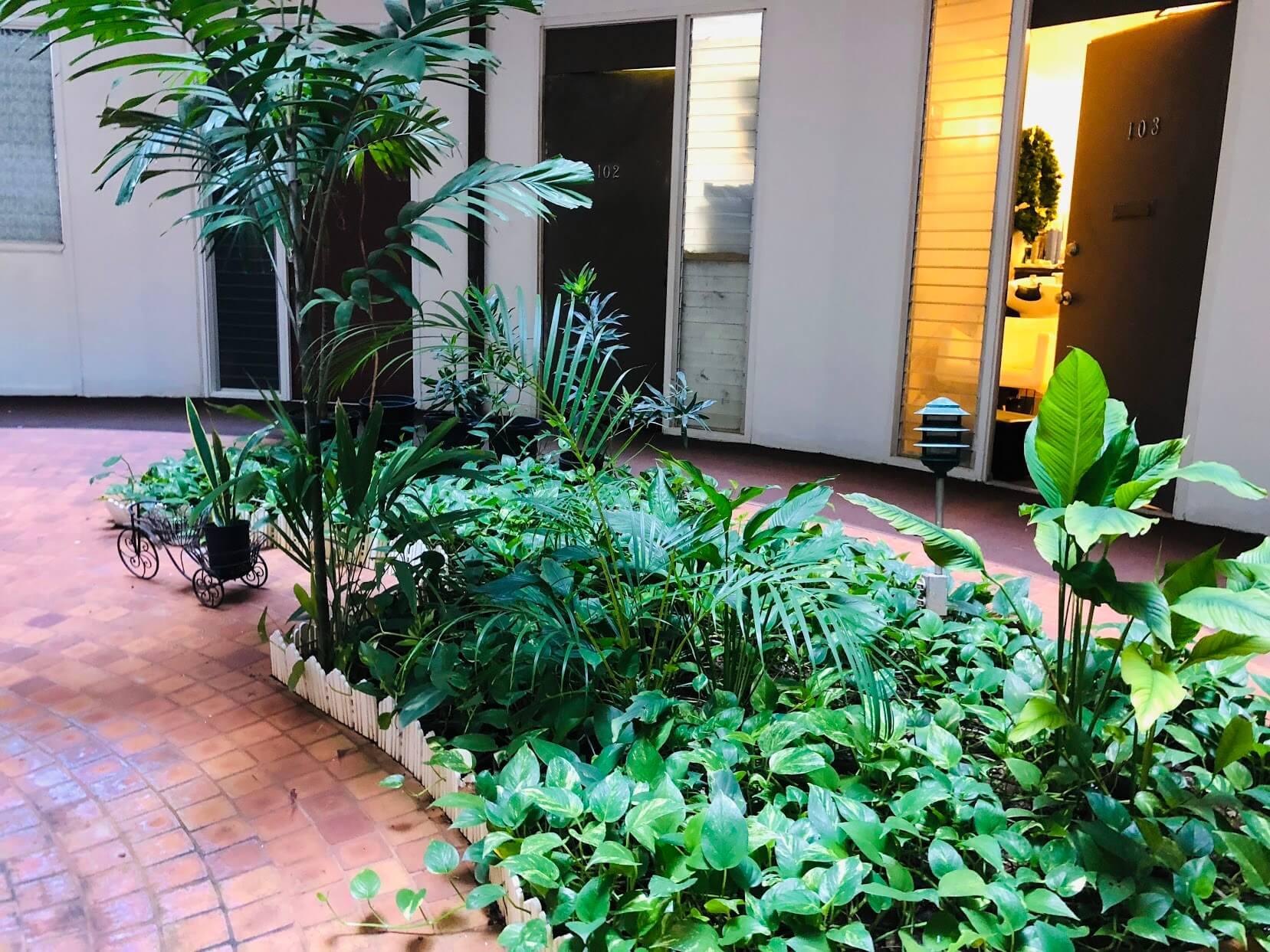 Kaimuki Jadeの植物