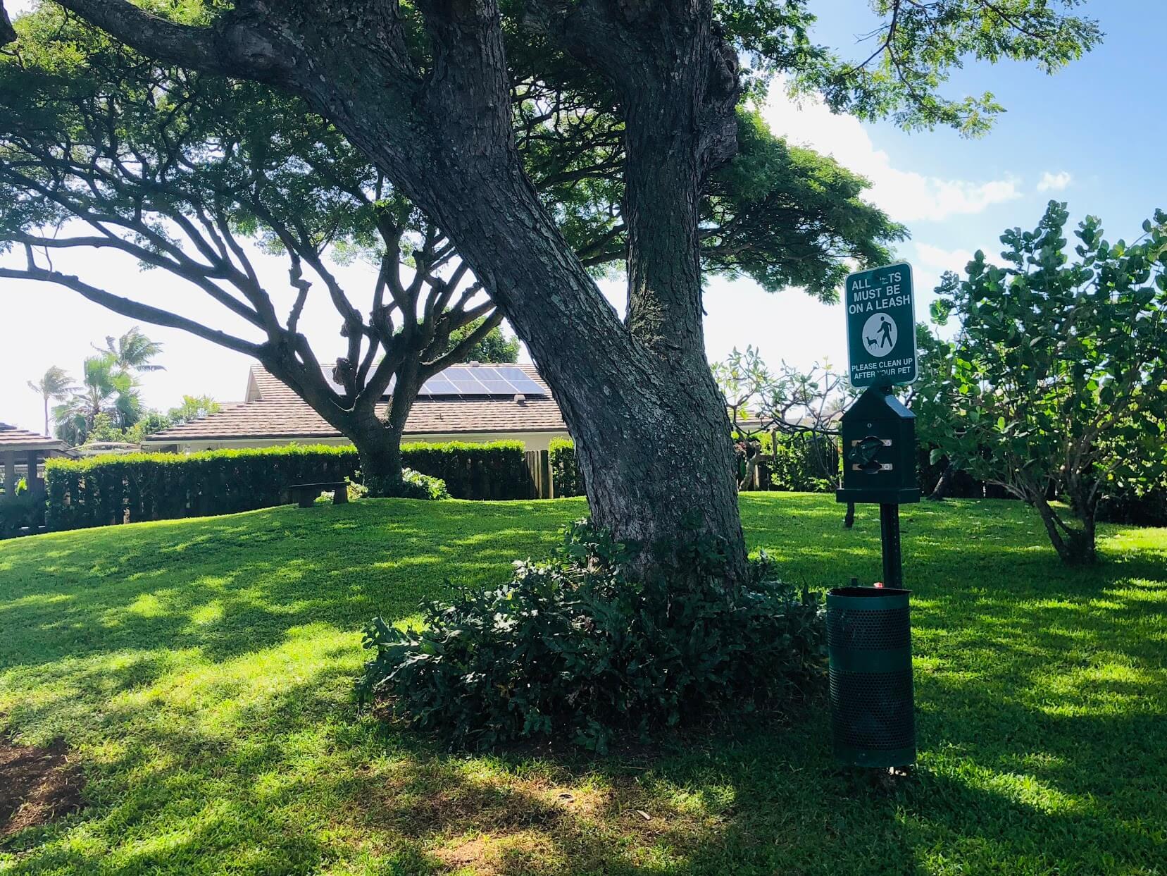 Kuapa Isleの樹木