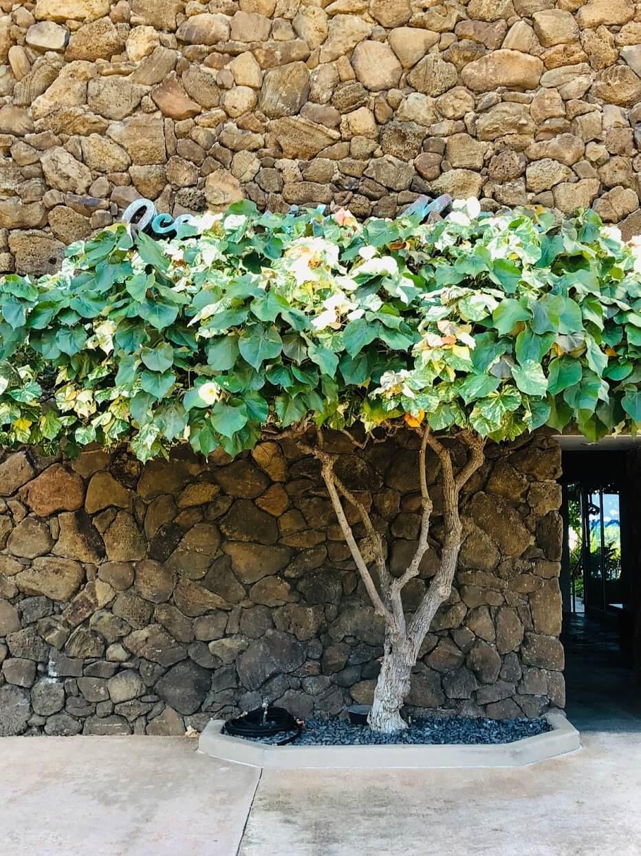 Oceanside Manorの植物