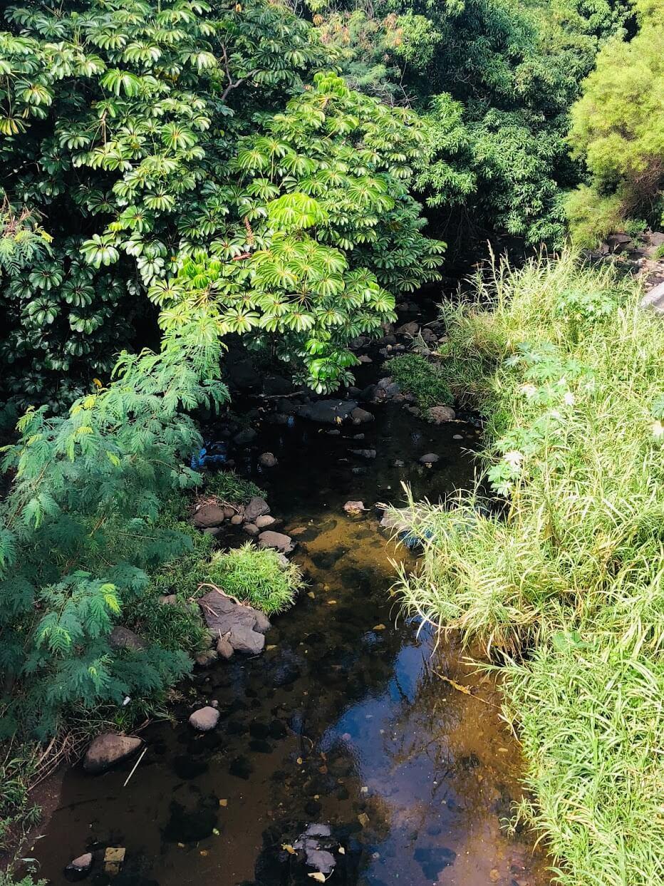 Regency Parkの河
