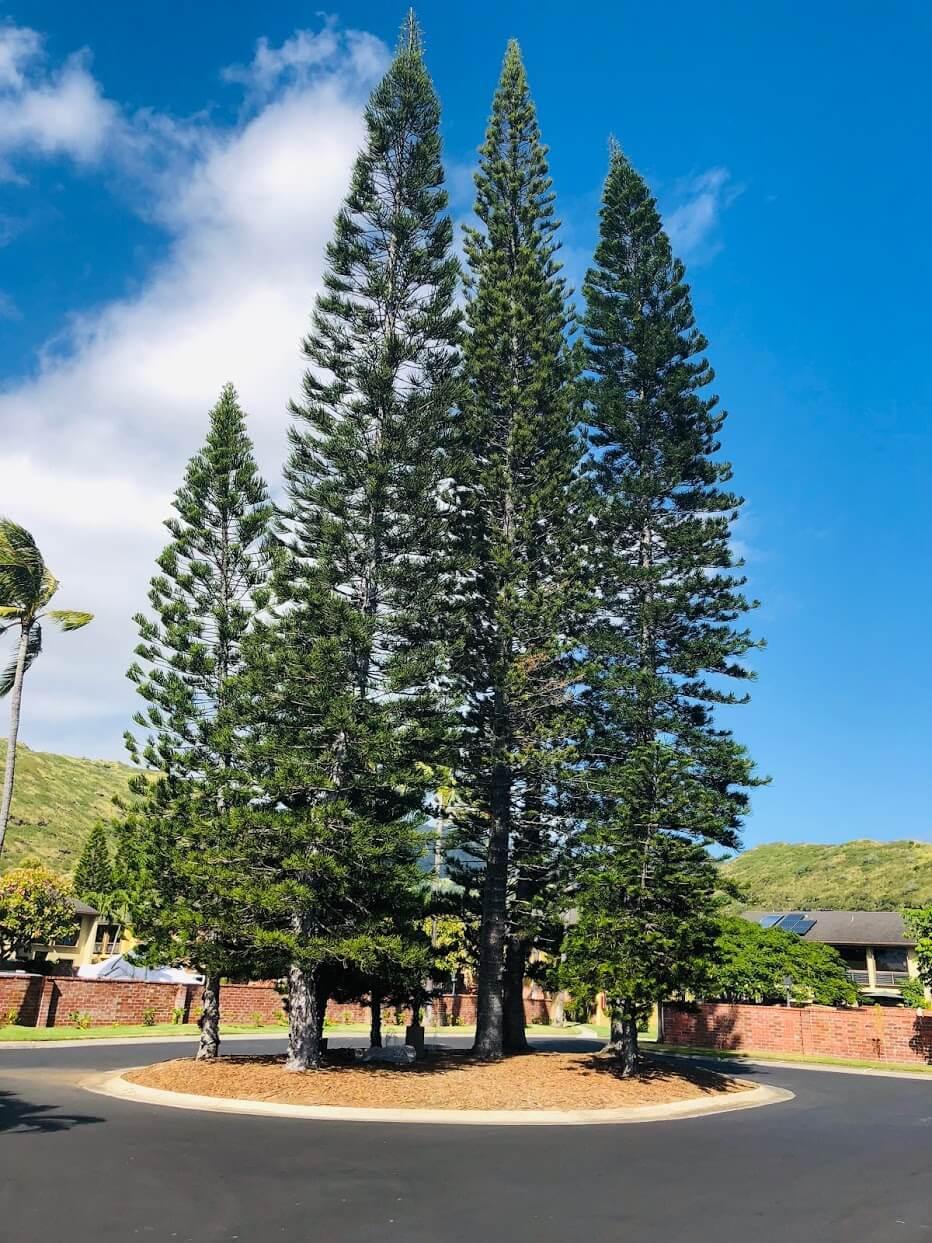 The Mooringsの樹木